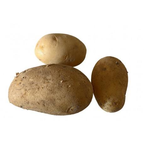 Patata Ecológica